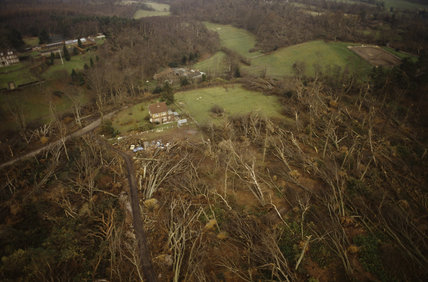 An aerial view showing uprooted trees in the parkland