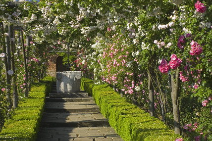 The well-head at the end of a pergola walk covered with roses in the Walled Garden at Polesden Lacey, Surrey