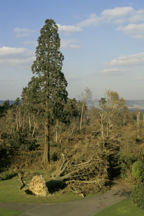 A view from the south looking north at the uprooted trees at Emmetts Garden, Kent, caused by the storm in October 1987