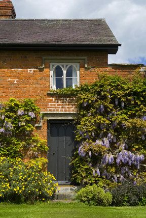 Wisteria And Cottage In The Walled Garden At Croft Castle