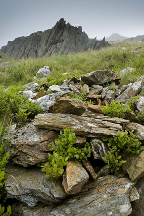 Shattered rocks and bilberries (Vaccinium myrtillus) high on the slopes of Snowdon on Hafod Y Llan farm, Snowdonia, Wales