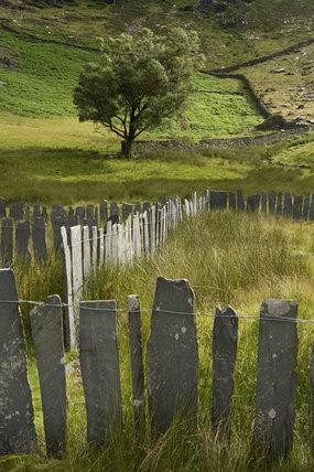 Traditional Slate Fence At Cwm Llan On Hafod Y Llan Farm