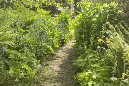 Abundant foliage planting along a paved path through the woodland area at Hidcote Manor Garden, Gloucestershire