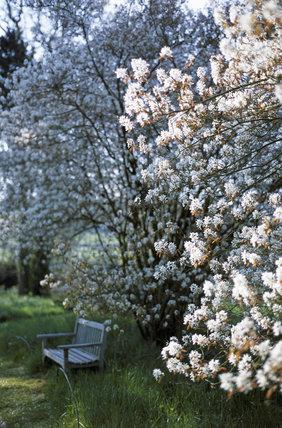Blossom in the Wild Garden at Bateman's, East Sussex, framing a garden bench