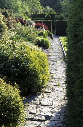 The Main Border at Lytes Cary Manor in June with Phlomis fruticosa, Cotinus and Berberis