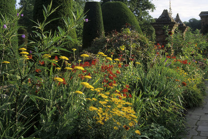 The south side of the double border in the garden at Packwood House, with the yew topiary of the Sermon on the Mount in the background