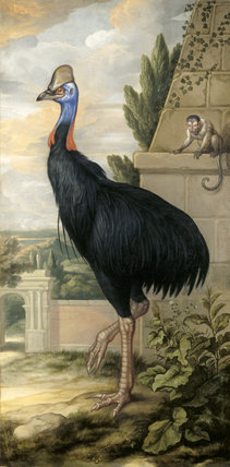 THE CASSOWARY with a monkey in the background, by Francis Barlow, post-conservation at Clandon Park