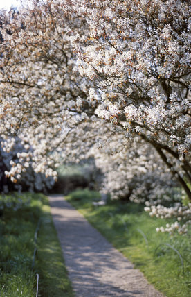 View of tree blossom in the wild garden at Bateman's, East Sussex