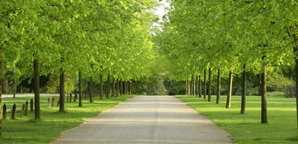 Avenue of lime trees at Polesden Lacey, Surrey, UK