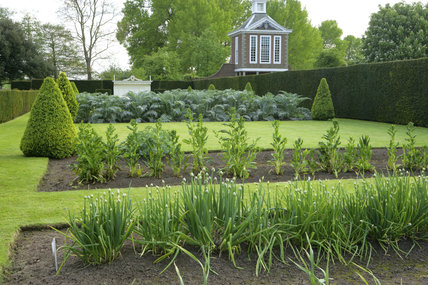 The vegetable garden in formal arrangement with the Tall Pavillion in the background at Westbury Court Garden, Gloucestershire, UK