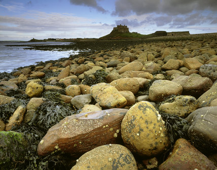 View of rocks, stones and seaweed on the causeway below Lindisfarne Castle taken at low tide
