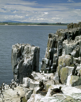 View of South Cliff on Inner Farne in the Farne Islands with Bamburgh in the distance