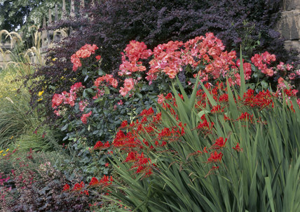 A herbaceous border with roses and crocosmia in the Entrance Court at Hardwick Hall
