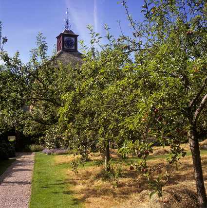 A view of the sheltered orchard at Acorn Bank, which contains a variety of traditional fruit trees