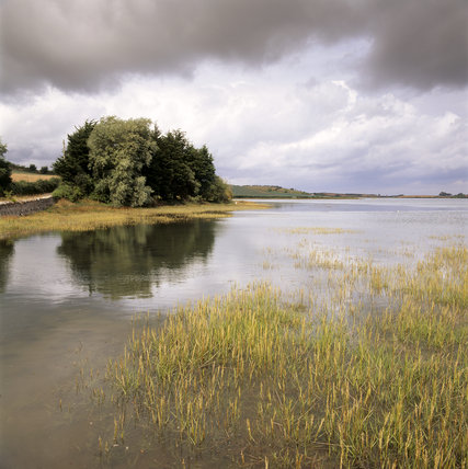 High tide in Strangford Lough near Ardmillan showing reeds at the waters edge and a clump of trees surrounded by water
