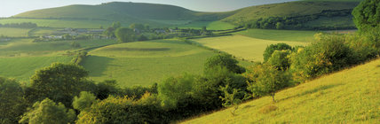 A view of the landscape at Fontmell Down in the summer, with houses in the background