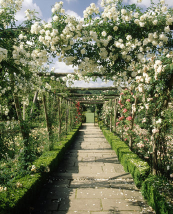 Looking Along The Pergola In The Rose Garden At Polesden