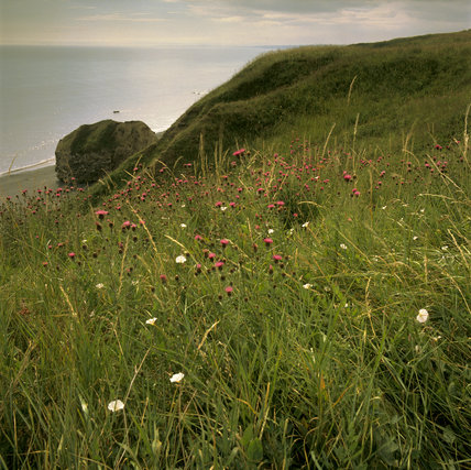 Wild flowers growing in meadow at Beacon Point, Co Durham, with beach below