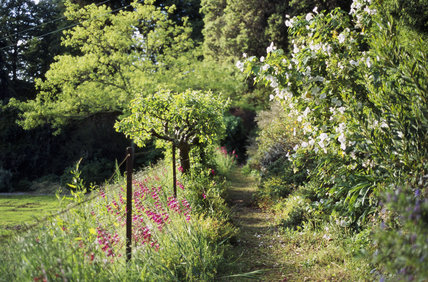 View of the Walled Garden at Greenway with overgrown border and fruit trees