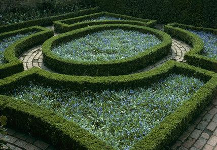 Scilla siberica in the formal setting of the Fuchia Garden