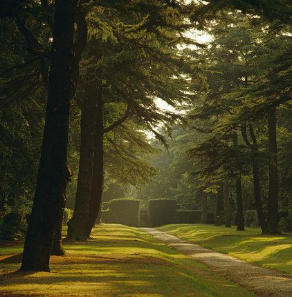 The Avenue of trees at Biddulph Grange