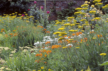 View of yellow and orange wildflowers and plantings in the garden at Gunby Hall