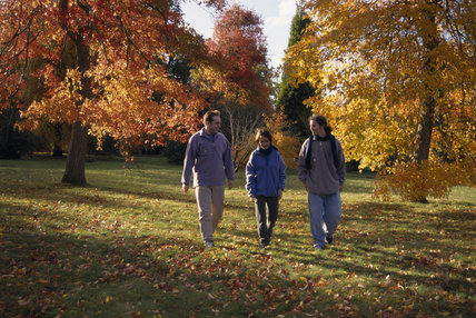 Three young people walk between two large trees bearing different shades of autumn