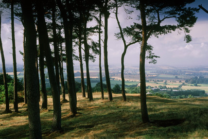 A view of the surrounding landscape at Clent Hills looking through the trees