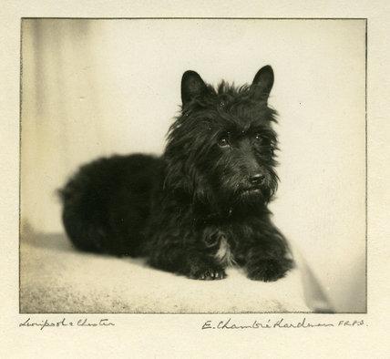 Mrs P. Kerr's Dog