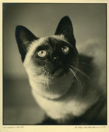 Mrs Moore-Dutton's Cat