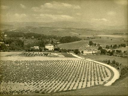 Farmland, Europe