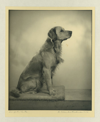 Mrs Rowland's Dog, Jasper