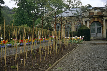 The flower garden at Tyntesfield, North Somerset, with canes ready to support growing plants, and the Orangery in the background