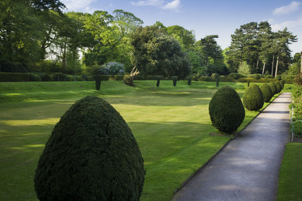Topiary yews and lawn in the garden to the north west of the house at Speke Hall, Merseyside