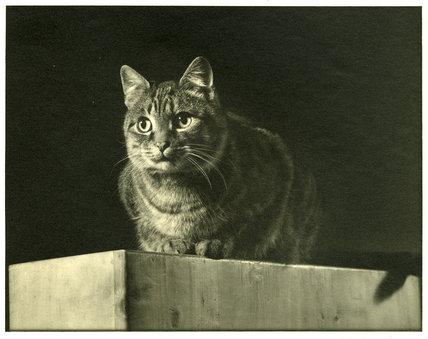 Billy (Lunt's Cat)