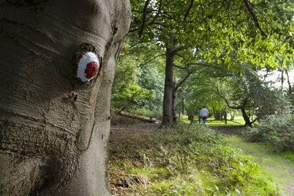 Painted tree trunk in the walks around the site at Sutton Hoo, the Anglo-Saxon royal burial site, Woodbridge, Suffolk