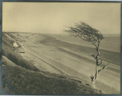 Unidentified Beach with Wind Damaged Tree