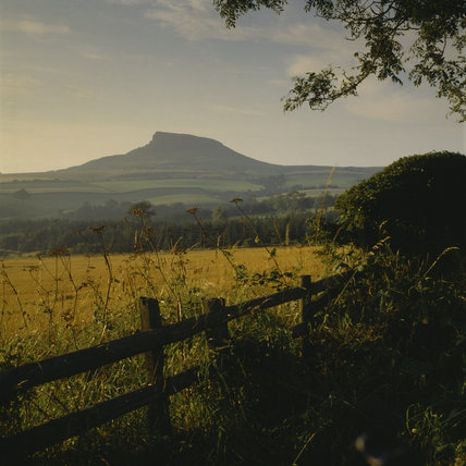 Roseberry Topping, view to hill across farmland golden field and wooden fence in foreground