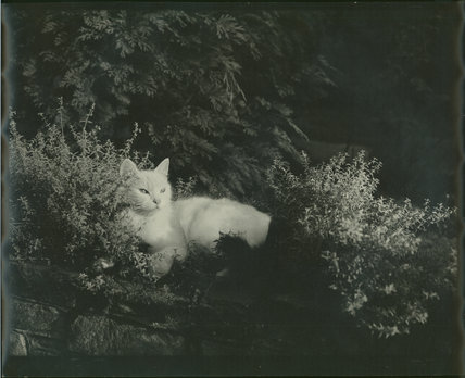 Mrs Brockley's Cat