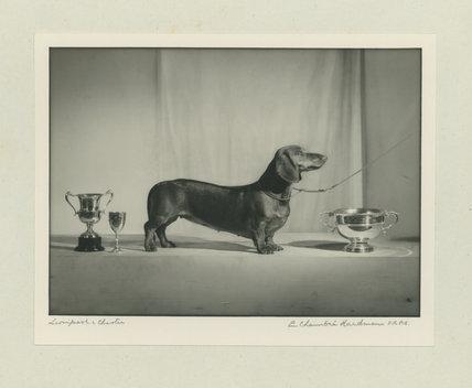 Mrs Preston's Dog