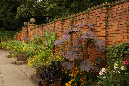 The Lady Garden with exotic planting around the edges of the red brick walls at Tyntesfield, Wraxall, North Somerset