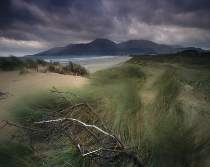 Storm clouds over the Mourne Mountains, windswept marram grass in the foreground and a bare, twisted branch from a tree