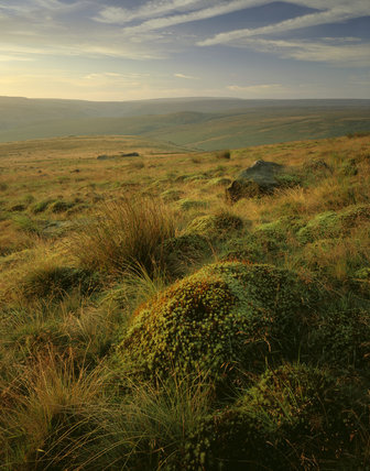 Marsden Moor and Wessenden Moor from Pule Hill on an early summer morning, with close view of flowering mosses and moor- land grasses in foreground and two hill ranges beyond