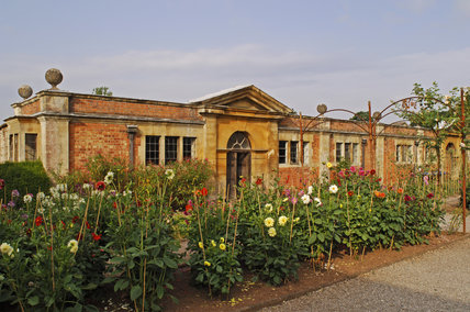 Dahlias in the cut flower garden with garden buildings beyond at Tyntesfield, Wraxall, North Somerset