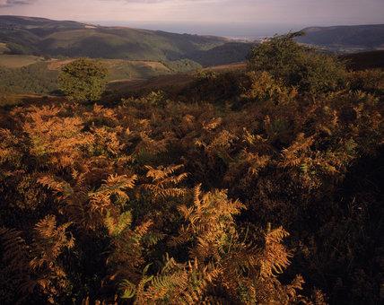 Autumn tinted bracken in Horner Woods & Porlock Bay seen from Dunkery Hill on The Holnicote Estate