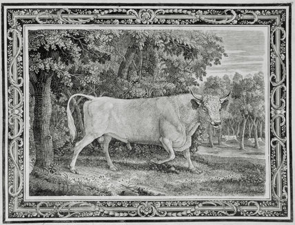 THE CHILLINGHAM BULL, 1789, engraving by Thomas Bewick, 1753-1828, commissioned by Marmaduke Tunstall of Wycliffe, N