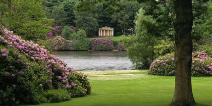 A panoramic view of the lake at Clumber Park with mounds of rhododendron and the Greek Temple on the far shore