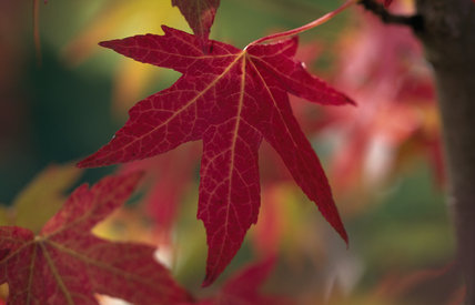 A detailed close up of an autumnal leaf