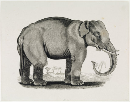 THE ELEPHANT, an engraving from the