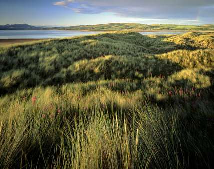 Evening cloud shadows on Grasses and wildflowers at Sandscale Haws